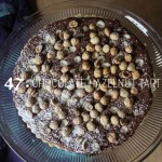 47chocolatehazelnuttart-2